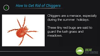 5 Ways to Control the Chigger Population