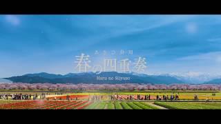 あさひ舟川「春の四重奏」PR動画を制作しました! 富山県朝日町の舟川べりでは、地元舟川新地区の農家が、桜に合わせて極早生のチューリップ...