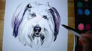 Carly the Bearded Collie