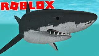 "Wild Ocean (Roblox)-attack ace Orcas, mortal Prey ""white shark""-(#4) (Gameplay EN-BR)"
