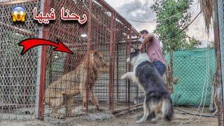 ردة فعل جاك لما دخلنا حديقه الحيوانات !! هجم على الاسد 😱