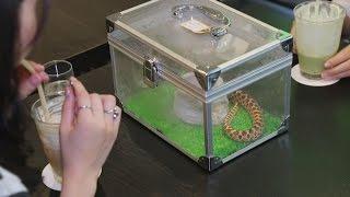 Кафе с животными: сурикаты, кошки, змеи… (новости)