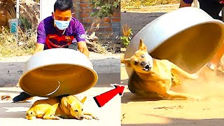 Aluminum Box vs Prank Dog Very Funny  Must Watch Funny Comedy New Prank With Try To Stop Laugh