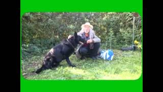Первая сцена в деревне,где бомж и черная собака на