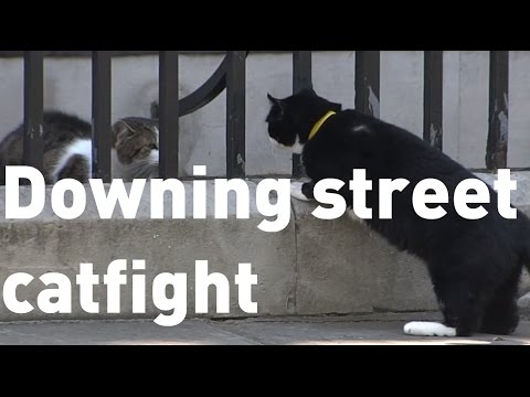 Downing Street catfight