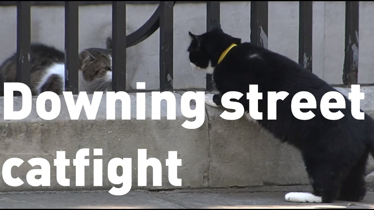 225715c20d0 Downing Street cats Larry and Palmerston get in another fight - YouTube