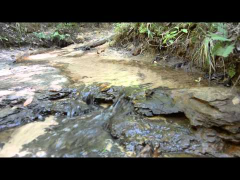 Creek Flowing Over Stones in The Forest - Relaxing Video - Natural Sounds