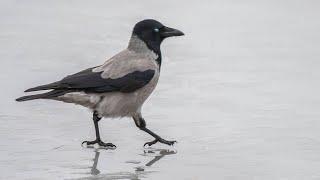Funny Animals - Смешные и курьёзные случаи из жизни животных и птиц