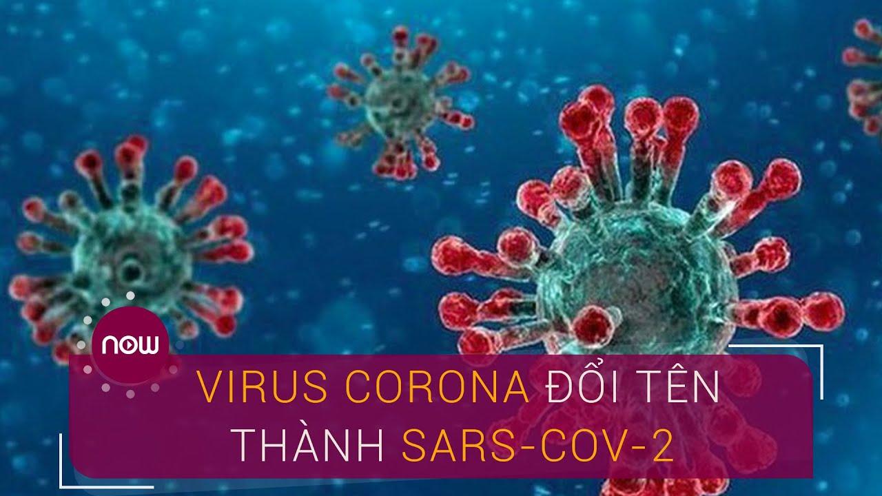 Vì sao virus Corona được đặt tên mới SARS-CoV-2? | VTC Now