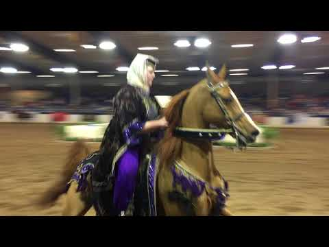 2018 Scottsdale Arabian Horse Show Experience- Flying Horse