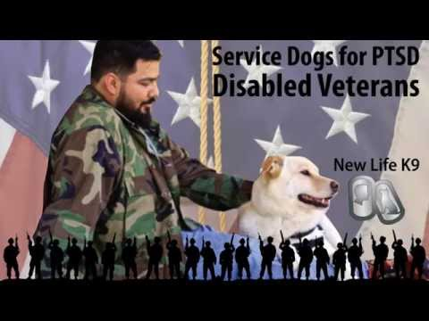 Service Dogs for PTSD Disabled Veterans