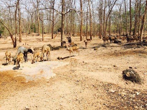 Jungle safari at kawal tiger reserve