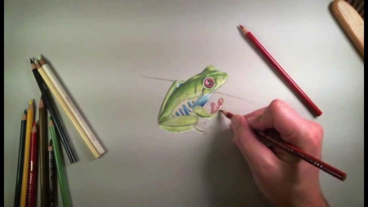 colored pencil drawing of a frog youtube