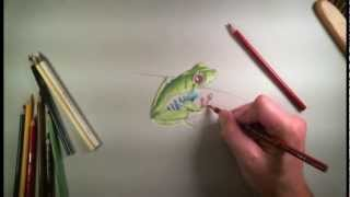 Colored Pencil Drawing of a Frog