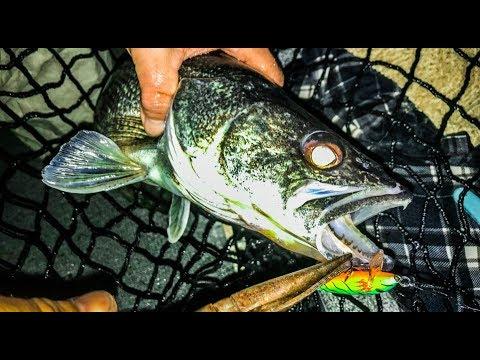 NY Walleye Opener - Part 1 Of 2 - Chautauqua Walleye Limit