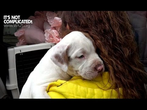 Saving 3 Homeless Puppies Surrendered to Detroit Pit Crew - Howl & Hope For Dodo Dogs