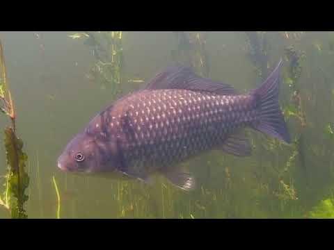 О чем молчат рыбы 14 Как живут рыбы в озерах