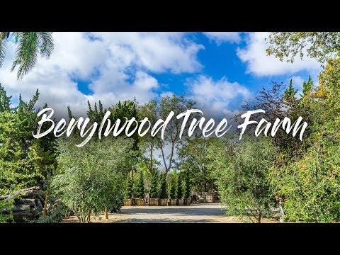 Berylwood Tree Farm - YouTube