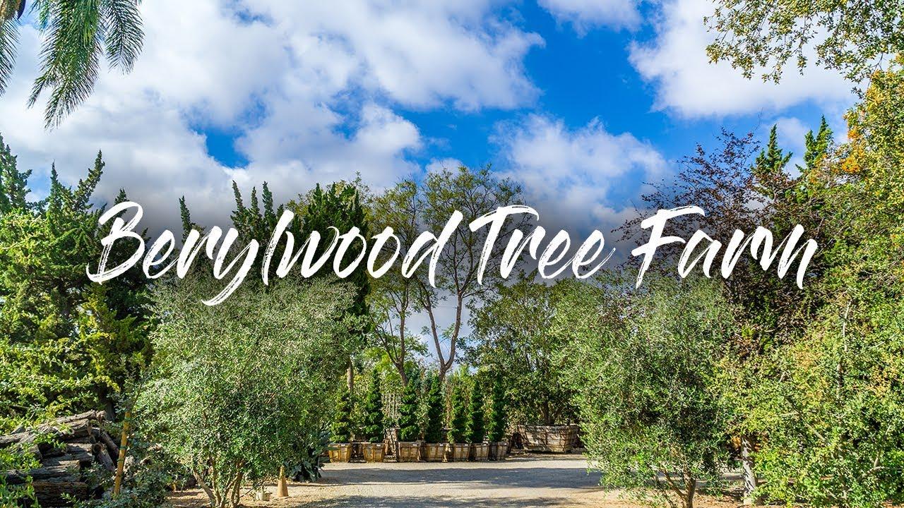 Berylwood Tree Farm