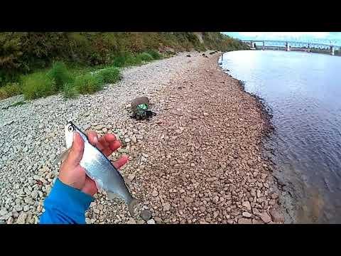 Рыбалка на реке Волхов.  Ловлю ужин для