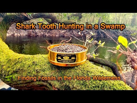 Looking For Shark Teeth In Florida - Swamp Canoeing, Exploration And Fossil Hunting