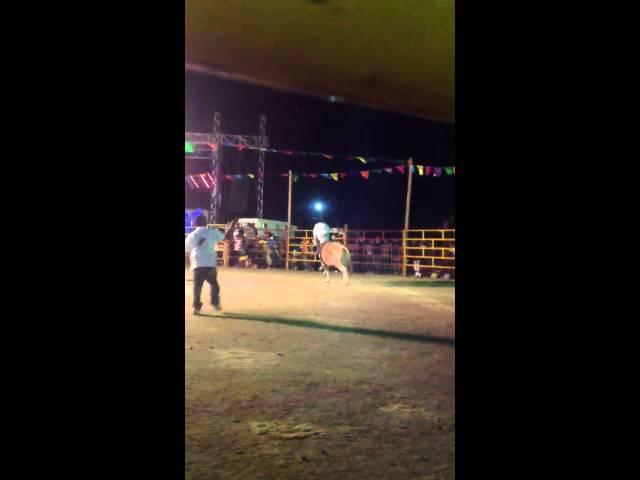 Jaripeo, San Juan Guelavia 2013 Videos De Viajes