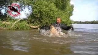 Vyatkins' Glock - protection dog training
