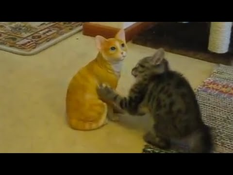 Cute Kitten Playing With Fake Cat | Porcelain Fight