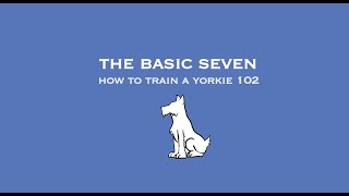 How To Train A Yorkie 102: The Basic Seven Pt.1