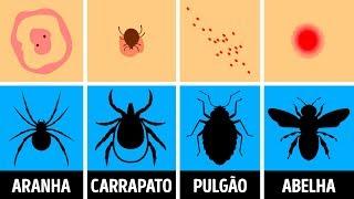 Na padrão de aranha pele de teia