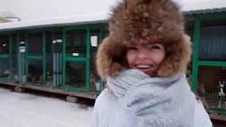 Приют для бездомных собак Москва