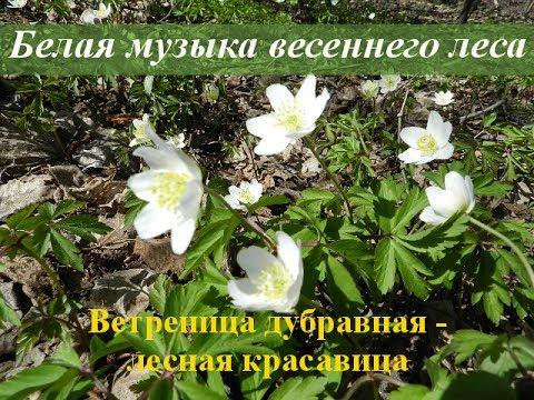 Лечебные травы фото и названия, сборы трав, растения