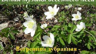 Звуки природы. Весна. Медитация на цветы видео(Звуки природы. Весна. Медитация на цветы видео -------------------------------------------- Больше о Здоровье и Красоте ☛ http://bog..., 2014-04-27T18:49:19.000Z)