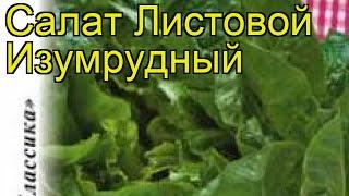 Салат листовой Изумрудный. Краткий обзор, описание характеристик, где купить семена