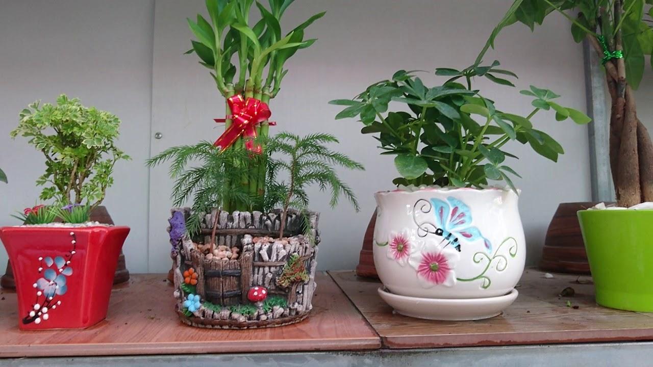 Vườn cây cảnh phong thủy – cây cảnh mini để bàn