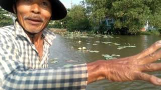 0241 Gặp cao thủ  giăng lưới bắt cá mưu sinh trên cánh đồng (Cân nhắc trước khi xem)