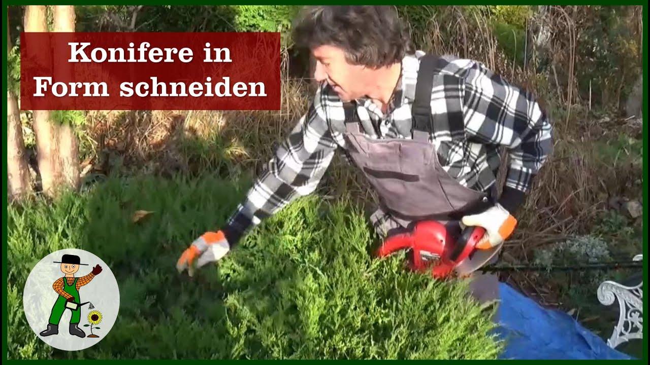konifere in form schneiden - youtube
