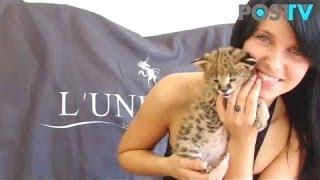 Сервал, котята - Царские кошки! (Post TV)