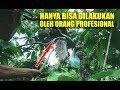 Penuh Rintangan Berburu Keroto Atau Telor Semut Di Kebun Untuk Pakan Burung  Mp3 - Mp4 Download