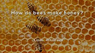 Скачать How Do Bees Make Honey