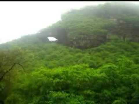 Natural Forests of Arabia (Yemen)  اليمن