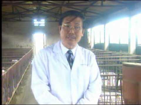 Phong tri benh sinh san cho lon nai PART1