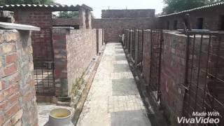Sandhu pig farm