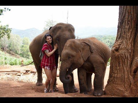 Chiang Mai, Vientiane, Elephants, and Night Markets