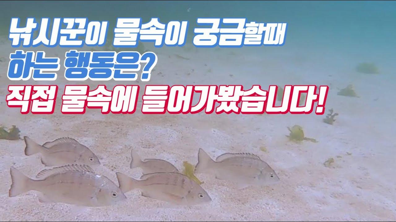 낚시할때 궁금했던 바다속! 직접 들어가봤습니다. 벵에돔떼부터 감성돔떼, 돌돔까지 깨끗한 바다속에서 다양한 어종을 볼 수 있었습니다