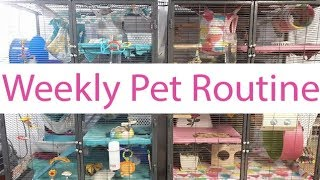 Weekly Pet Routine | Kaileys Pet Care 2017