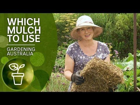 Mulch – Which One And When To Use It