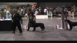 Eve - Flat-Coated Retriever Day 1 Renaissance Dog Show April 2, 201...