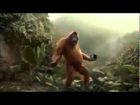 Gorilla singt Hoch die hände Wochenende | ♥
