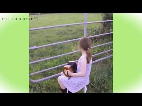 Cute girl playing consultino             コンサルティーノで牛を呼ぶアイルランドの少女